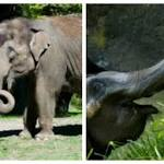 Elephants Being Moved From Seattle To Okc Zoo