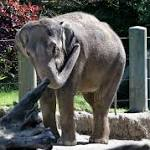 Oklahoma City Zoo Staff Looks For Answers In Elephant's Death